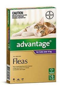Cat Flea Worming Tick Treatments