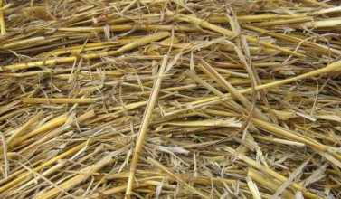 bedding straw 2