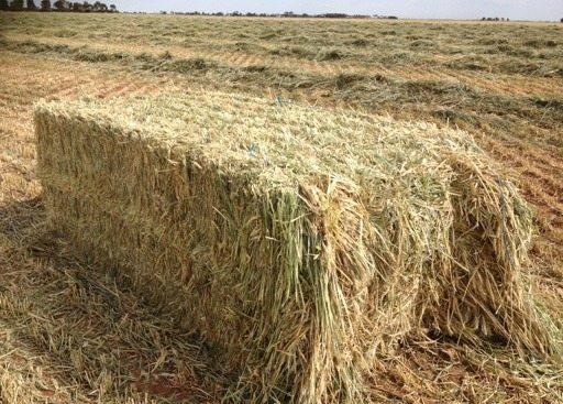 Wheaten Hay Adelaide Hills Landscape Amp Fodder