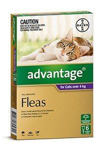 Cat Flea Worming Tick Treatments