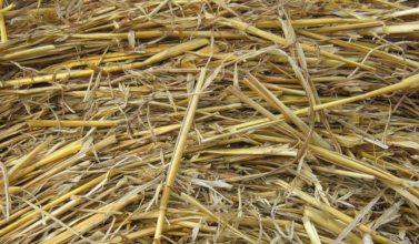 bedding straw 2