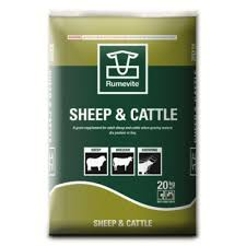 Sheep & Cattle